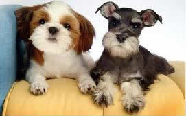 Grooming styles for Small Dogs