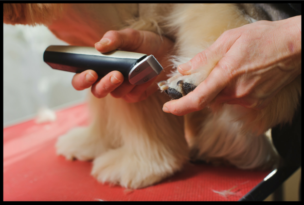 Blog petzrush pet travel kennels how to groom a dog with long hair solutioingenieria Choice Image