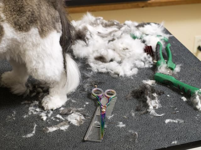 Starting your own Dog Grooming business