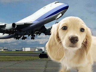 Airlines That Will Ship Pets Petzrush Pet Travel Kennels
