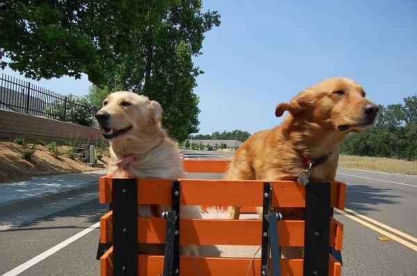 Shipping a Dog
