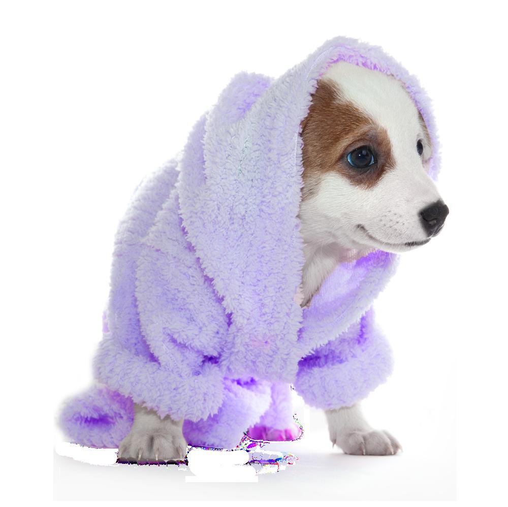 Dog Groom And Spa