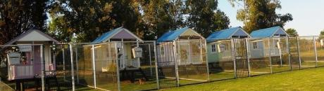 Best Dog Kennels in Pretoria